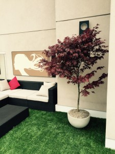 Greenscape Design Artficial Turf Condo Patio Artificial Red Japanese Maple Tree