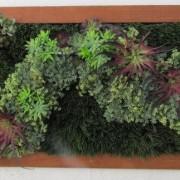 Greenscape Design Custom Artificial Green Wall copy