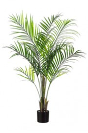 Greenscape Design Areca Palm 8'