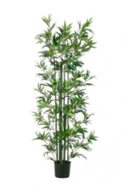 Greenscape Design Bamboo Tree - Green Cane