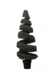 Greenscape Design Boxwood Spiral Topiary 5' Tall