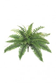 Greenscape Design Fern Green Groundcover