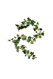 Greenscape Design Ivy Garland 5'