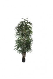 Greenscape Design Lady Finger Palm Tree 8'