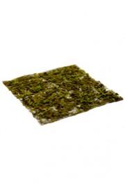 Greenscape Design Moss Mat Groundcover