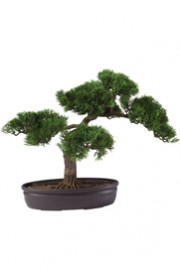 Greenscape Design Pine Bonsai Tree