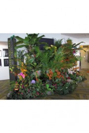 Greenscape Design Tropical Vignette