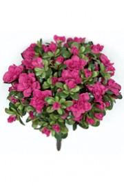 Azalea Bush Pink - Greenscape