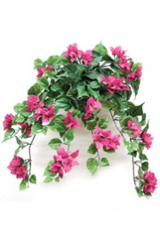 Bougainvillea Bush Pink -Greenscape
