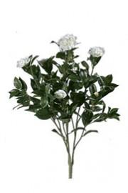 Camelia Bush White - Greenscape