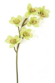 Cymbidium Orchid Lime Green -Greenscape.jpg