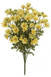 Daisy Bush Yellow - Greenscape