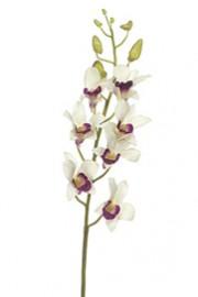 Dendrobium Orchid White -Greenscape