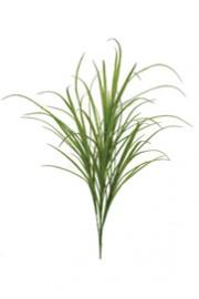 Fountain Grass 40 inches tall