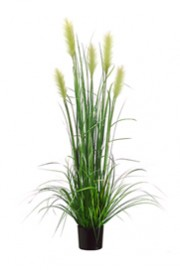 Foxtail Reed Grass - Greenscape