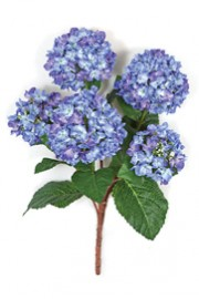 Hydrangea Bush Blue - Greenscape