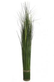 Onion Grass Bundle Green