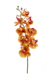 Phalaenopsis Orchid Orange -Greenscape.jpg