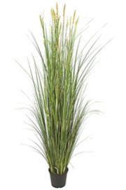 Snake Grass and Reed Bush