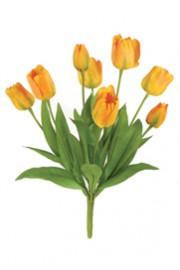 Tulip Bush Yellow -Greenscape